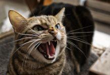Cat Seen Her First